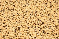 Black Eye Beans Background Stock Photo