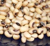 Black-Eye-Beans Stock Image