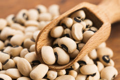 Black eye beans Royalty Free Stock Photography