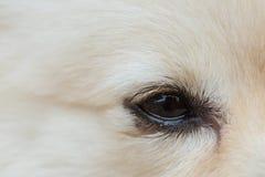 Black eye of white dog Royalty Free Stock Photos