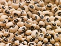 Black Eyed Beans stock images