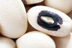 Black-Eyed Pea. Macro shot of a dried black-eyed pea Stock Image