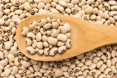 Black Eyed Pea legume. Grains in wooden spoon. Close up. Vigna unguiculata is scientific name of Black Eyed Pea legume. Also known as Goat Pea, California Royalty Free Stock Photos