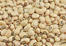 Black-eyed pea seeds. Top view of pile of black-eyed pea seeds Royalty Free Stock Photography