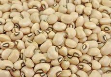 Black-eyed pea seeds Royalty Free Stock Photography
