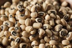 Black Eyed Peas asciutto organico Fotografia Stock