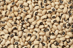 Black-eyed peas Stock Images