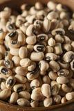 Black Eyed Peas sec organique Photo stock