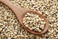 Black eyed peas in a wooden spoon. On a black eyed peas background. Close-up Stock Image