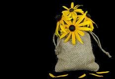 Black-eyed susan bouquet in burlap bag Royalty Free Stock Image