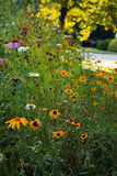 Black Eyed Susan daisy and cone flower vertical Royalty Free Stock Image