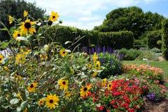 Black Eyed Susan Daisy flowers in garden Stock Photos