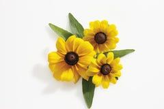 Black-eyed Susan flowers (Rudbeckia hirta) Royalty Free Stock Images
