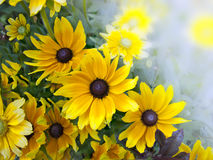 Black-eyed Susan postcard Stock Images