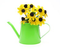 Black-eyed Susan in watering can Stock Photos