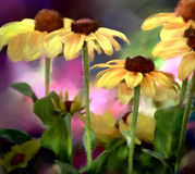 Black-eyed Susans Stockbild