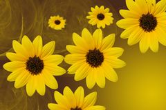 Black-eyed Susans Stock Image