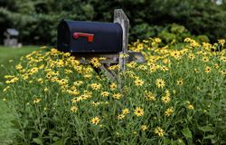 Black Eyed Susans engulfing mail box. Patch of Black Eyed Susans surrounding country mailbox in the spring Stock Photos