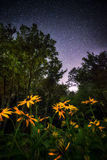 Black Eyed Susans Under the Stars Royalty Free Stock Images