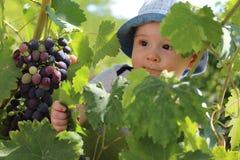 Black eyes, black grapes Royalty Free Stock Photography