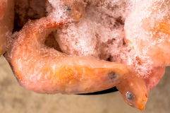 Black eyes frozen pink shrimp covered with ice Stock Photos