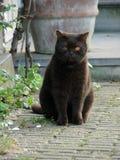 Black fat cat Royalty Free Stock Photos