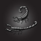 Black Fat-Tailed Scorpions Royalty Free Stock Photography