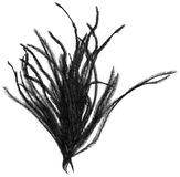Black feather Royalty Free Stock Images