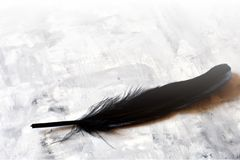 Black feather Stock Photos