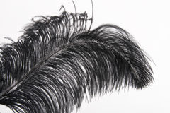 Black feather Royalty Free Stock Image