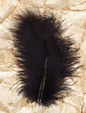 Black feather Stock Photo