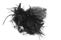 Black Feather Hairpin Stock Images