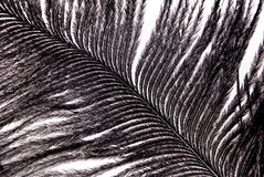 Black feather plumage texture Royalty Free Stock Images