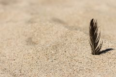 Black feather in sand on beach. Sandy beach background. Tropical travel concept. Vacation concept Stock Image