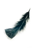 Black feather  on white background Stock Photos