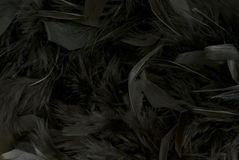 Black Feathers Royalty Free Stock Photo