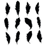 Black feathers. Raster Stock Images