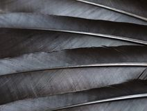 Black feathers stock photos