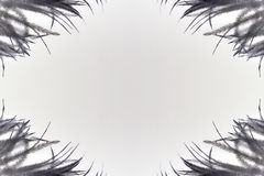 Black feathers on the white background Royalty Free Stock Photography