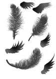Black feathers and wings Royalty Free Stock Photos