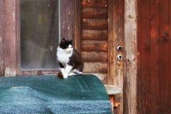 black feline white royaltyfri foto