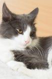 black feline white 库存图片