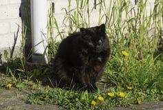 Black cat. Black female cat sitting down stock photography