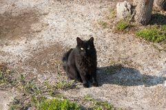 Black female cat sitting outdoors and looking at camera Stock Photography