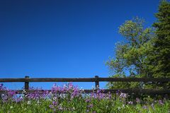 Black fence and blue sky Stock Photography