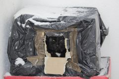 Black feral cat hiding from snow in a box. Black feral cat hiding from snow in a shelter made of cardboard box covered with plastic bag. Animals need our help in stock images