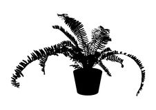 Black fern in pot for indoor office and house plant, vector. Black fern in pot for indoor office and house plant, silhouette vector illustration Royalty Free Stock Photos