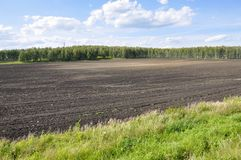 Black field with trees far away. Cultivated area. Agriculture. Bright blue sky and green grass.  stock photography