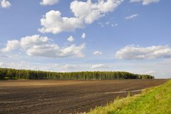 Black field with trees far away. Cultivated area. Agriculture. Bright blue sky and green grass.  stock image