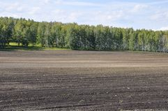 Black field with trees far away. Cultivated area. Agriculture. Bright blue sky and green grass.  royalty free stock photography